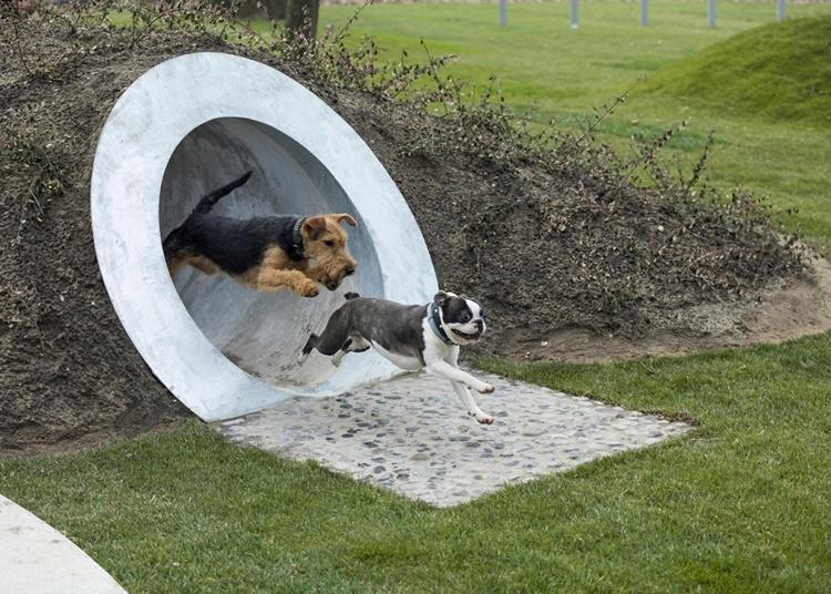 kutya1
