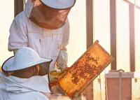 Az okoskaptárok fogják megmenteni a méheket?